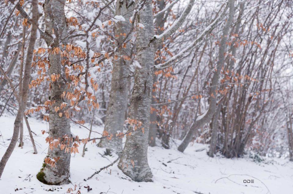 Dernières neiges sur les pentes du Pariou